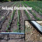 selang distributor untuk air ke tenaman